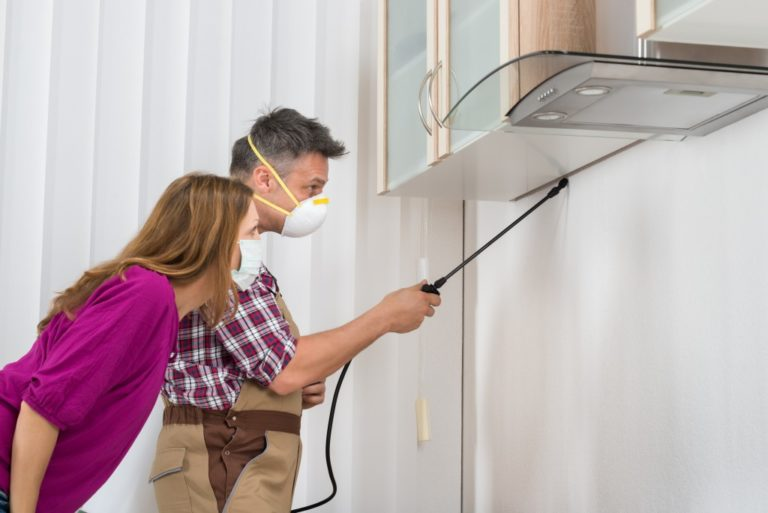 man removing pest in the home